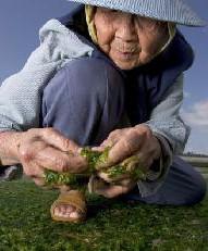 Longevidad y Ejercicio
