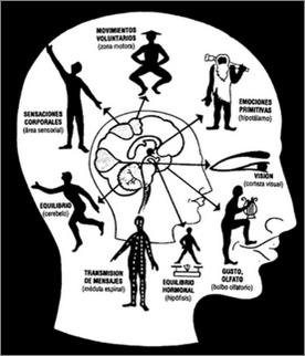 Teoría del Desarrollo Psico-evolutivo del Niño