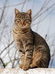 La Historia de la Destreza Admirable de un Gato