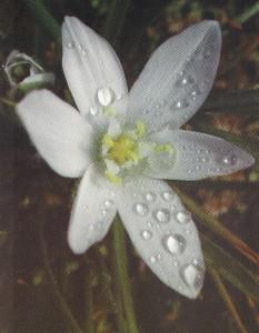 La Terapia Floral, una Nueva Alquimia del Alma