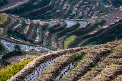 Rice terraces, Lonji, China